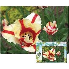 Wild Republic Puzzle Parrot Tulip 500 Pieces - 1