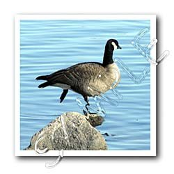 Canada Goose Photographed by Angelandspot - 10x10 Iron On Heat Transfer For White Material