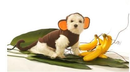 Dog Costume Monkey Saddle Dog Costume Monkey Pet