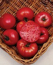 Tomato Mortgage Lifter BULK 1,000 Seeds Great Heirloom Garden Vegetable (Tomato Seeds Mortgage Lifter compare prices)