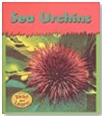 Sea Urchins (Tiny-Spiny Animals)