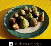 Buy Brown Turkey Fig Tree Five Gallon