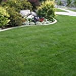 10kg BACKLAWN HARD WEARING LAWN GRASS...