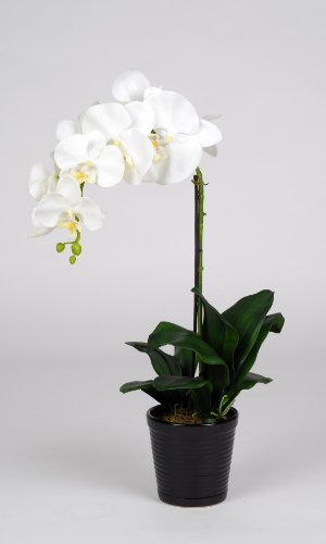 "Artificial 22"" Single Stem Phalaenopsis, White"