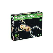 Tedco 4D - Full Skeleton Frog - 1