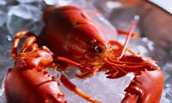 6 Live Maine Lobster ( 1- 1.24lbs. ) (Gourmet,Seafood at Your Door,Gourmet Food,Gourmet Gifts,Meat, Dairy & Seafood)