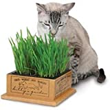 SmartCat Kittys Garden Organic Cat Treat