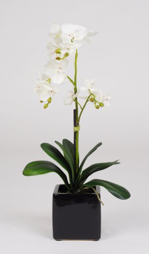 "Artificial 17"" Mini Phalaenopsis Orchid, White"