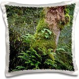 Forests - Tiger Mountain Forest, Ferns on Big Leaf Maple Wild - 16x16 inch Pillow Case