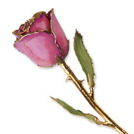 Long Stem Dipped 24K Gold Trim Fuchsia Genuine Rose in Gift Box