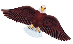Wildlife American Bald Eagle Bird Wing Flapper Kite-55