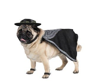 Zorro Pet Costume for Halloween in Size Large