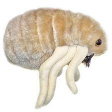 Giant Microbes Flea (Ctenocephalides felis)