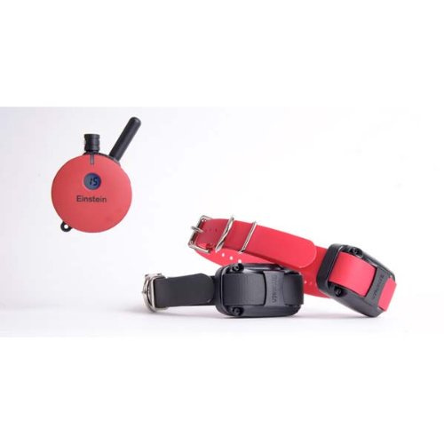 Educator Remote Dog Collar Type: 1 Dog