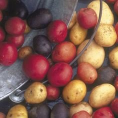 seed-potato-mix-5-lbs-certified-seed-non-gmo-red-lasoda-golden-yukons-and-blue