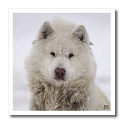 Canadian Eskimo Dog Hudson Bay Churchill Northern Canada - 6x6 Iron On Heat Transfer For White Material