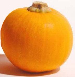 Buy Sugar Pie Pumpkin Seed – Packet of Heirloom Seeds