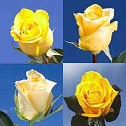 100 Fresh Cut Yellow Mother\'s Day Roses | Fresh Flowers Express Delivery | Perfect Gift for Mother\'s Day.