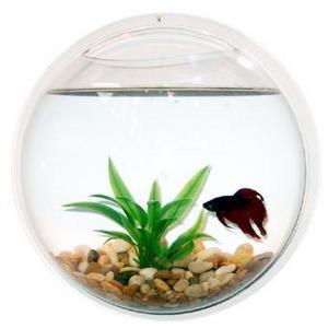 Wall mount fish bowl aquarium tank beta goldfish for Fish bowl amazon