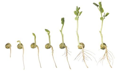 Edvotek 910 Isolation Of Plant Mitochondria And Chloroplasts
