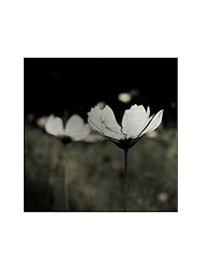 Fauna Flora Photography On Mounted Metal