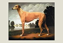 Paper poster printed on 20 x 30 stock. Greyhound on a Parkland Landscape