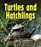 img - for Turtles and Hatchlings (First Step Nonfiction (Paperback)) book / textbook / text book