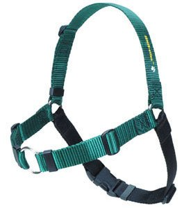 Softouch SENSE ation No Pull Dog Harness Green Medium Large by Sense-Ation Harness (Wonder Walker Harness compare prices)