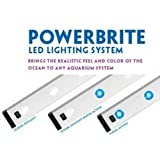 POWERBRITE LED STRIP 4X1W 10000K POWER LED'S ~ Current USA