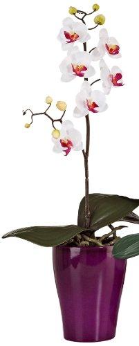 scheurich-keramik-orchidee-blanc-40cm-mis-en-pot-086-20