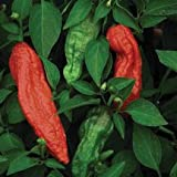 Bhut Jolokia, Ghost Chile Pepper (Capsicum chinense/C.frutescens) Stings like the Venom of a King Cobra, Scoville Heat Units 855,000 to 1,041,427 SHU! Approx. 20 Seeds