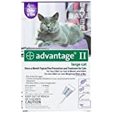 Flea Control for Cats and Kittens in Purple