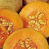 Organic Charentais Cantaloupe 35 Seeds
