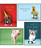 Little Critters- Scripture Greeting Cards - KJV - Boxed - Birthday