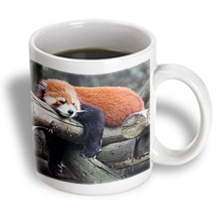 3Drose Mug_100288_2 Adorable Red Panda, Sichuan Province, China Ceramic Mug, 15-Ounce