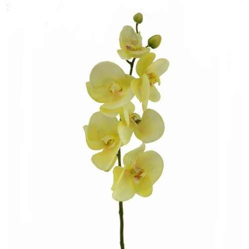 floristrywarehouse-artificial-silk-orchid-stem-latex-75cm-deep-cream-pale-lemon