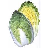 黄月70[白菜]【タネ】小袋