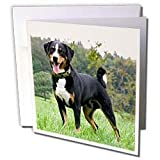 Dogs Appenzeller Mountain Dog - Appenzeller Mountain Dog - Greeting Cards-6 Greeting Cards with envelopes