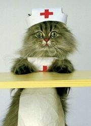 normal cat weight
