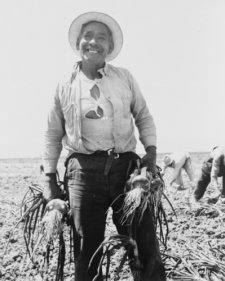 Mexican onion-picker in onion field near Tracy, California in 1935
