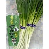 鳥取県の白ねぎ 1kg詰め