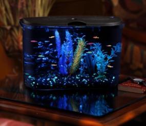 5 Gallon Aquarium Kit Fish Tank Aquarius Glofish Glass
