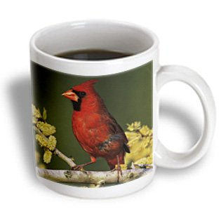 3Drose Northern Cardinal Bird, Lake Corpus Christi Texas, Ceramic Mug, 11-Oz