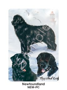 Best Friends Playing Cards, by Ruth Maystead - Newfoundland - 1