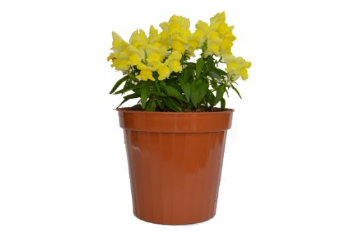 Plastic Decorative Pots 4 Terracota 6 Pack