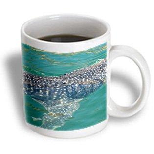 Danita Delimont - Sharks - Mexico, Midriff, Bahia De Los Angeles, Whale Shark - Sa13 Tdr0026 - Trish Drury - 11Oz Mug (Mug_86813_1)
