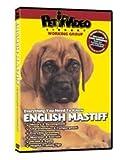 Mastiff Video