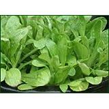 Premier Seeds Direct HRB14 Corn Salad Lambs Lettuce Mache Finest Seeds (Pack of 1000)