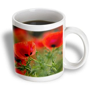 Danita Delimont - Darrell Gulin - Flowers - Close-Up Of Red Poppies In Fields Central Turkey - 11Oz Mug (Mug_187771_1)