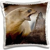 Seals - Namibia, Cape Cross Seal Reserve. Southern Fur Seals - Paul Souders - 16x16 inch Pillow Case (Seal Paul compare prices)